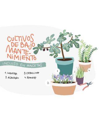 instagram plantea